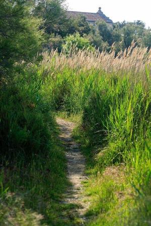 France, Bouches du Rhone (13), Parc Naturel Regional de Camargue, Arles, Salin de Giraud, Domaine de La Palissade