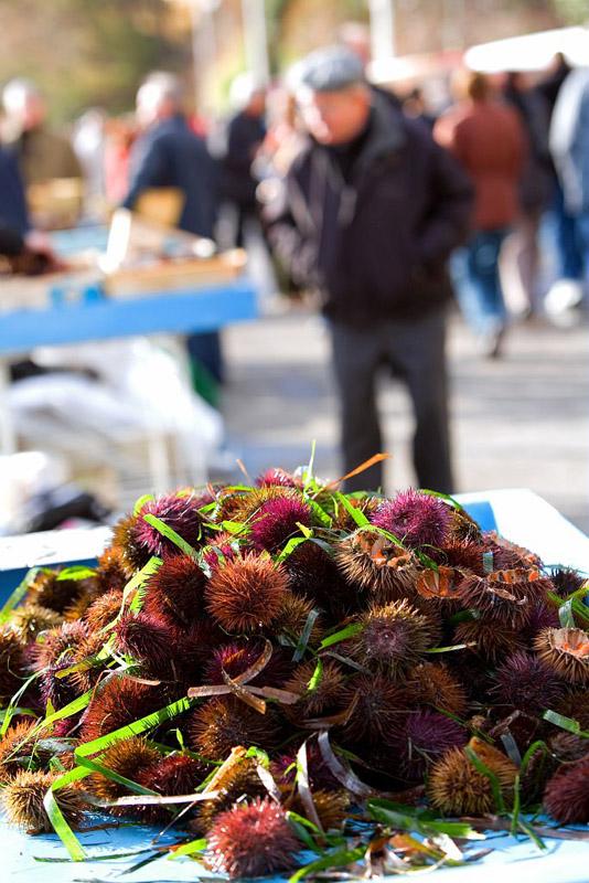 Oursins, fete de l'oursinade, Carry-le-Rouet, Bouches-du-Rhone (13) - France