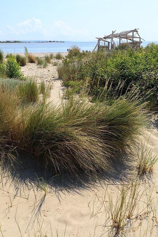 France, Bouches du Rhone (13), Parc Naturel Regional de Camargue, Arles, extremite de la plage de Piemanson, embouchure du Rhone