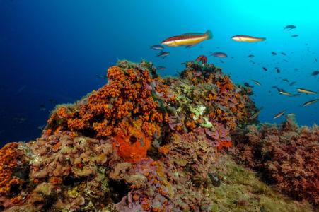 Parc des calanques,  Riou Sud - Coralligène vue sous marine © Olivier Bianchimani