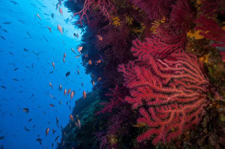 Parc des calanques, les Moyades - Coralligène vue sous marine © Olivier Bianchimani