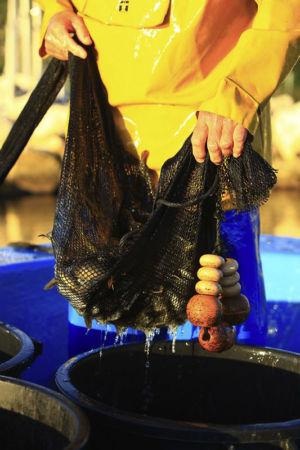 France, Bouches du Rhone (13), Saint Chamas, etang de Berre, peche a l'anguille