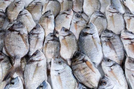 France, Bouches du Rhone (13), Cote Bleue, Martigues, quartier de Carro, quai Jean Verandy, marche au poisson, dorades